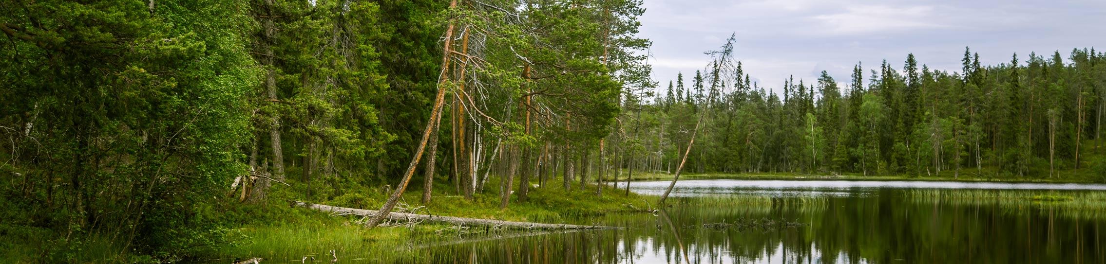 Maltti metsänhoidossa