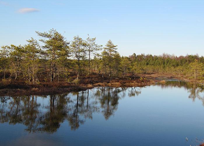Kymijoen Vesi ja Ympäristö - Suon arvottaminen